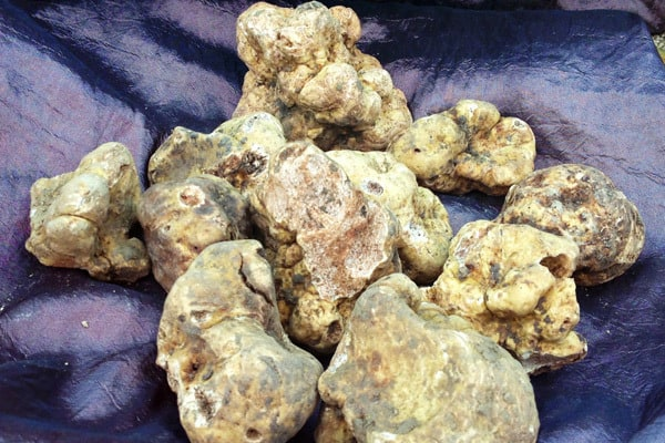 Istria Off The Beaten Track: Truffle hunting