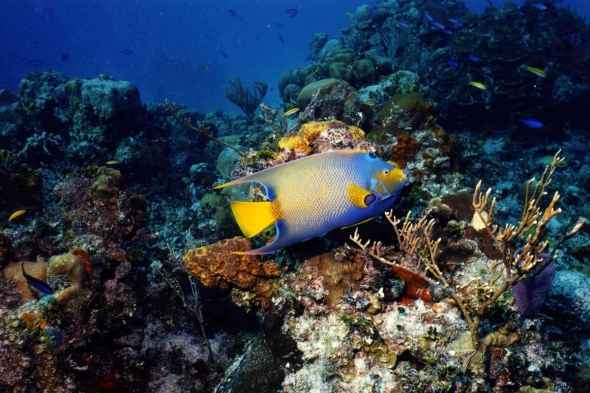 Top 10 things to do in Croatia: Snorkling & Scuba Diving