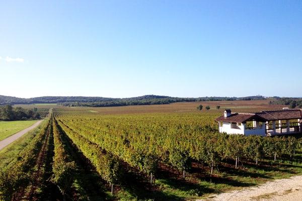 Istria Off The Beaten Track: Wine Tours