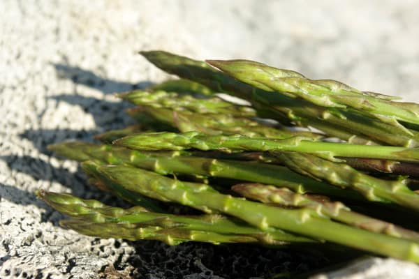 What to do in Croatia in spring: hunt for wild asparagus