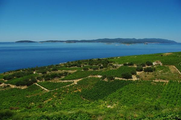 Reasons to visit the Peljesac peninsula: Postup