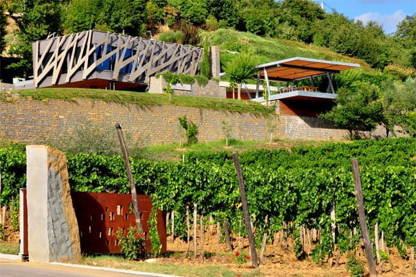 Wineries in Istria worth a visit: Kozlovic Winery
