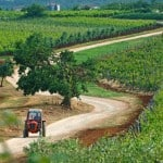 Wineries in Istria worth a visit