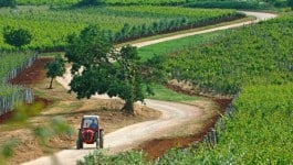 Wineries in Istria worth a visit: Roxanich Winery