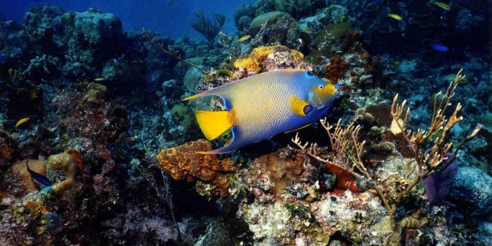 Snorkeling in Croatia | Underwater Life