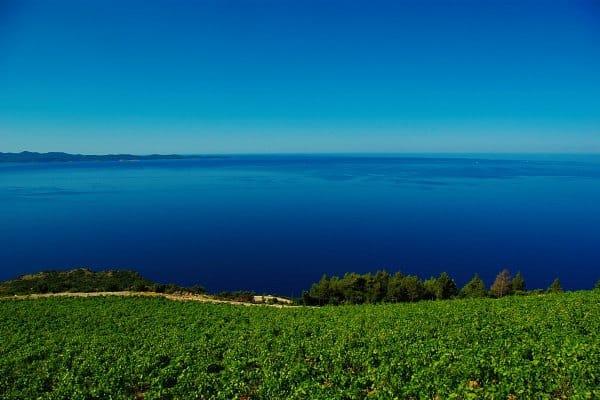 Peljesac Peninsula Travel Guide | Wine growing region - Dingac