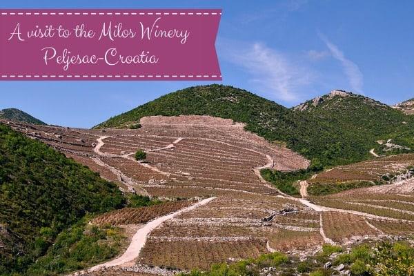 Croatia Wines | Frano Milos Winery Peljesac