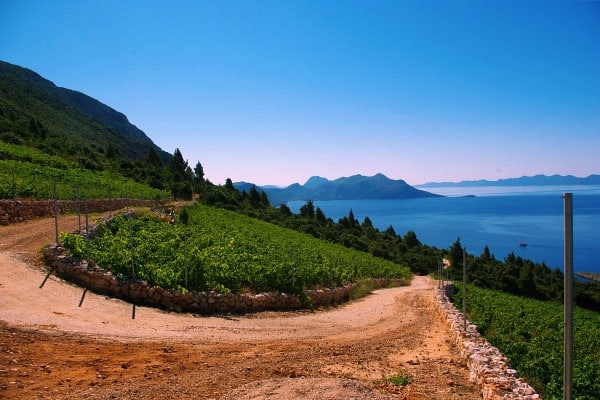 Peljesac Wine Tour | Wine growing region of Dingac
