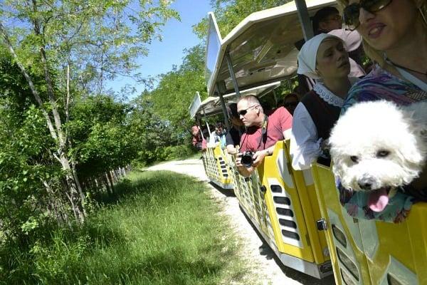 Things to do in Porec | Parenzana Train