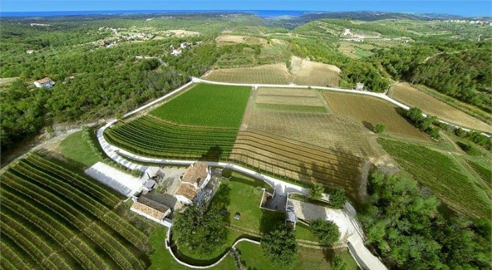 Reasons To Visit Istria Croatia |Great Wine Of Istria